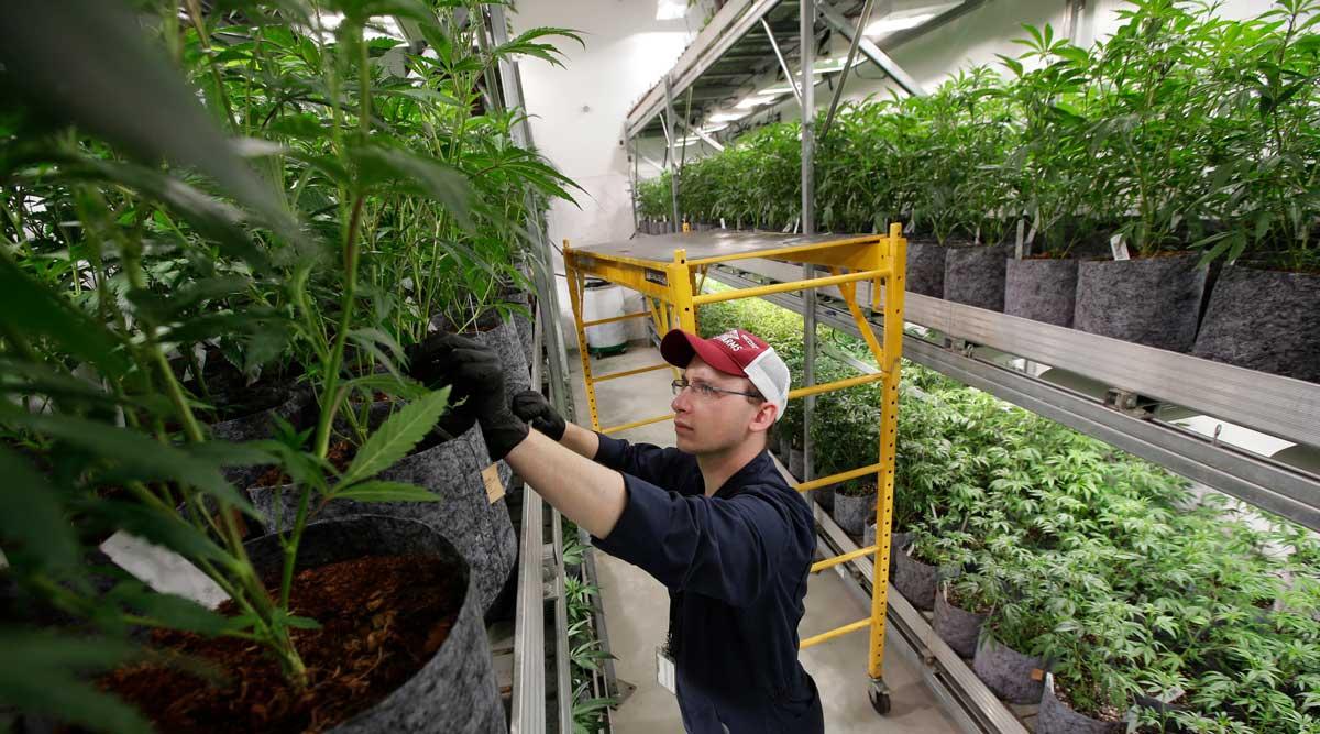 Recreational Marijuana Is Coming to Maine